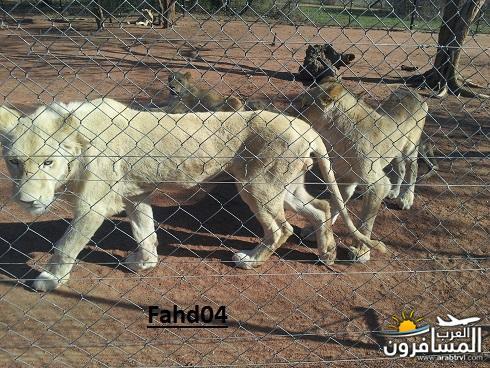 arabtrvl1451303006148.jpg