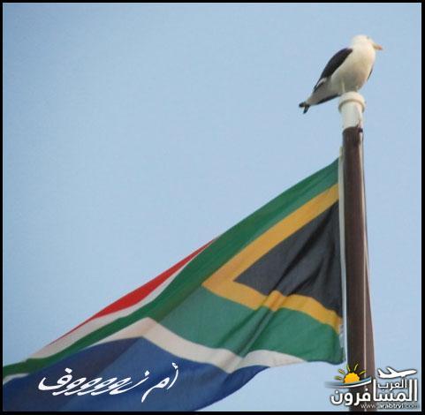 615908 المسافرون العرب رأس الرجاء الصالح