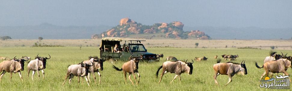 617372 المسافرون العرب الحديقة الوطنية في كينيا