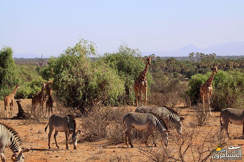 617373 المسافرون العرب الحديقة الوطنية في كينيا