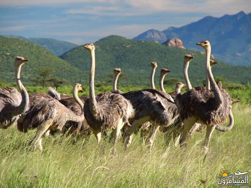 617374 المسافرون العرب الحديقة الوطنية في كينيا