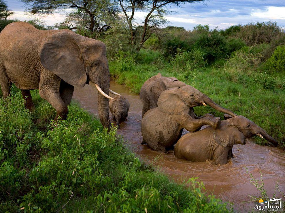 617375 المسافرون العرب الحديقة الوطنية في كينيا