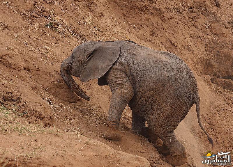 617376 المسافرون العرب الحديقة الوطنية في كينيا