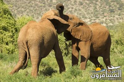 617377 المسافرون العرب الحديقة الوطنية في كينيا