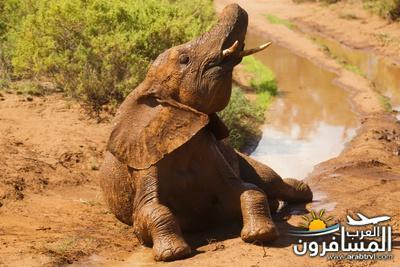 617379 المسافرون العرب الحديقة الوطنية في كينيا