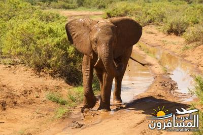 617380 المسافرون العرب الحديقة الوطنية في كينيا