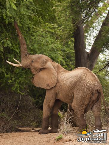 617381 المسافرون العرب الحديقة الوطنية في كينيا