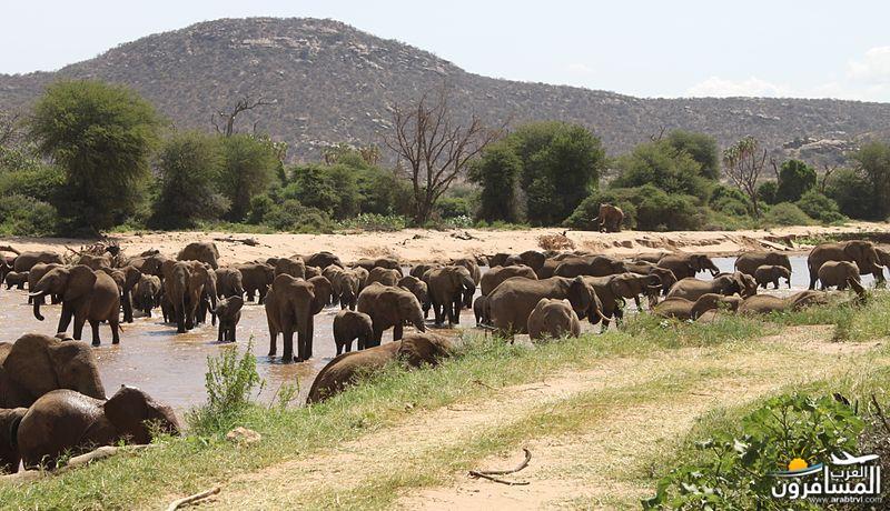 617382 المسافرون العرب الحديقة الوطنية في كينيا