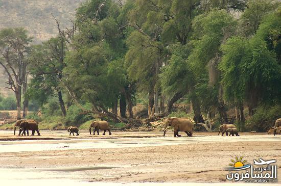 617383 المسافرون العرب الحديقة الوطنية في كينيا