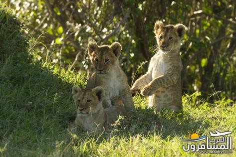 617384 المسافرون العرب الحديقة الوطنية في كينيا