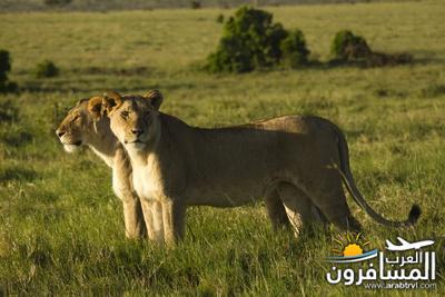 617385 المسافرون العرب الحديقة الوطنية في كينيا