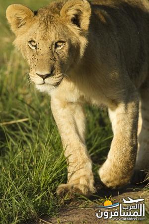 617386 المسافرون العرب الحديقة الوطنية في كينيا