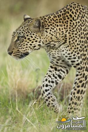 617387 المسافرون العرب الحديقة الوطنية في كينيا