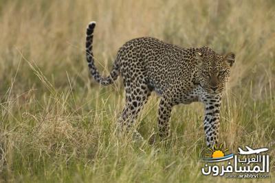 617388 المسافرون العرب الحديقة الوطنية في كينيا