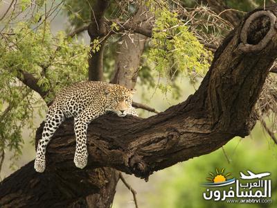 617389 المسافرون العرب الحديقة الوطنية في كينيا