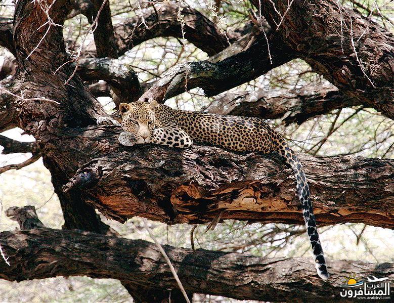 617391 المسافرون العرب الحديقة الوطنية في كينيا