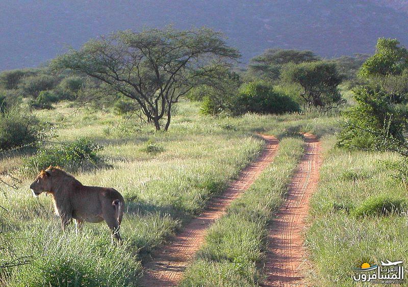 617392 المسافرون العرب الحديقة الوطنية في كينيا