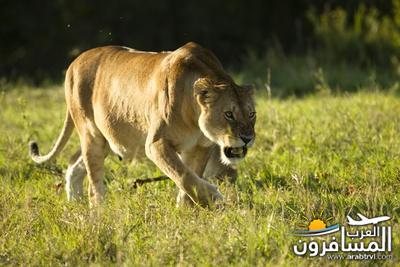 617394 المسافرون العرب الحديقة الوطنية في كينيا