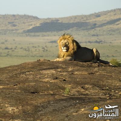 617395 المسافرون العرب الحديقة الوطنية في كينيا