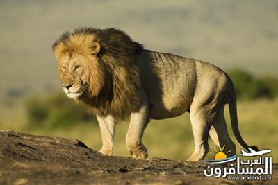 617396 المسافرون العرب الحديقة الوطنية في كينيا