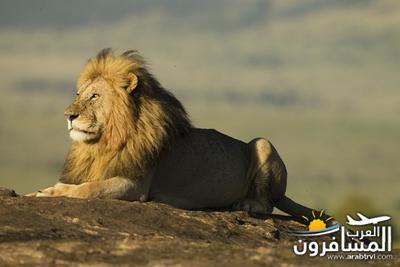 617397 المسافرون العرب الحديقة الوطنية في كينيا