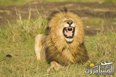 617398 المسافرون العرب الحديقة الوطنية في كينيا