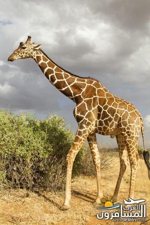 617402 المسافرون العرب الحديقة الوطنية في كينيا