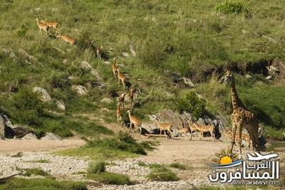 617403 المسافرون العرب الحديقة الوطنية في كينيا