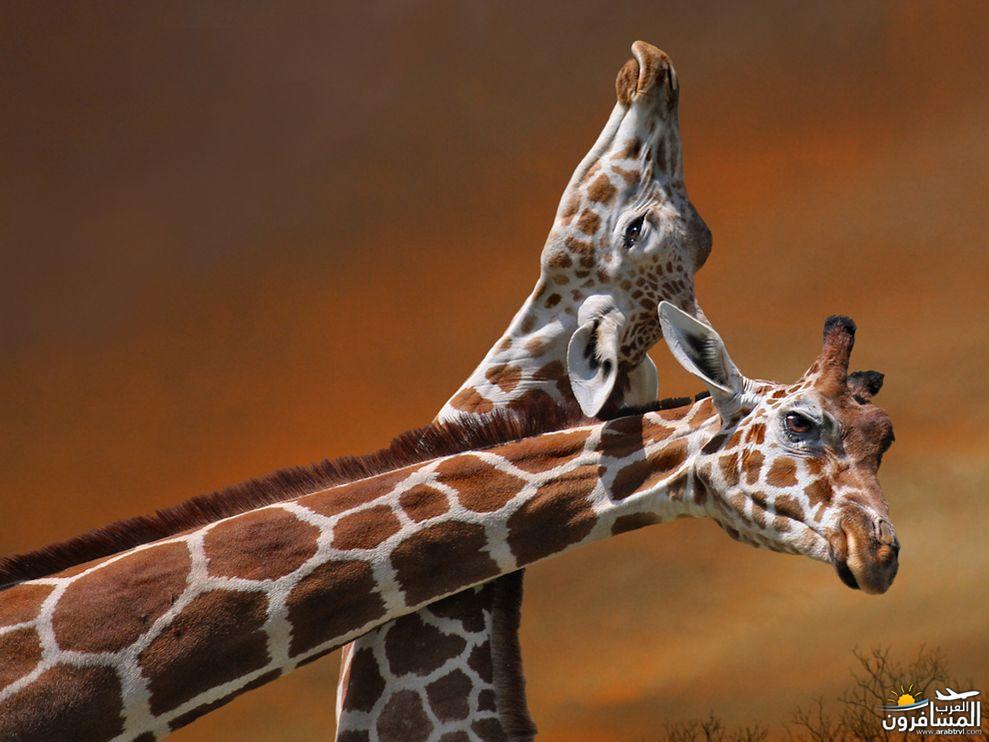 617405 المسافرون العرب الحديقة الوطنية في كينيا