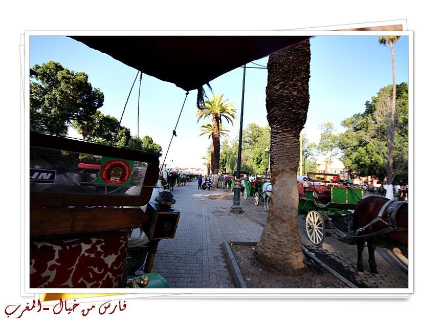 مدينة المغرب بالصور-629145