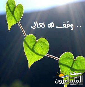 arabtrvl1447567693941.png