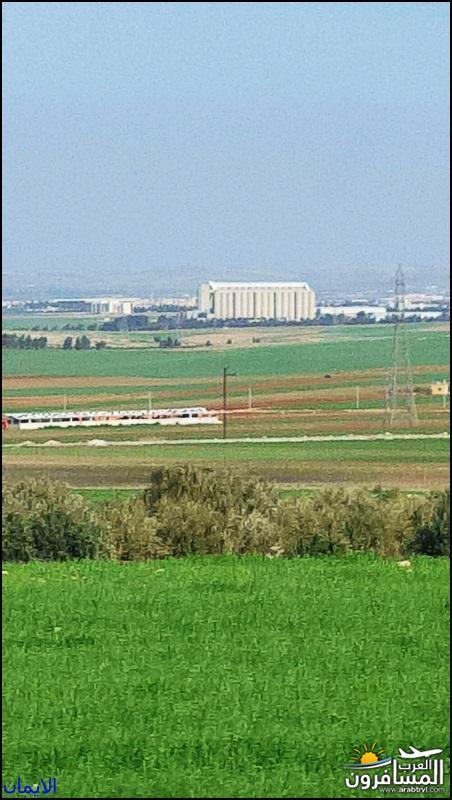 637795 المسافرون العرب هضبة الجولان المحتلة