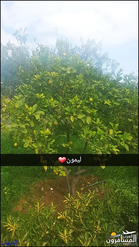 638326 المسافرون العرب الطبيعة الجبلية الخلابة