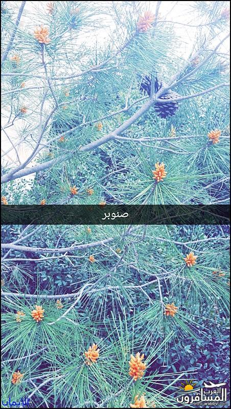 638327 المسافرون العرب الطبيعة الجبلية الخلابة
