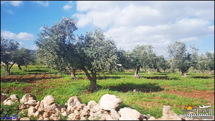 638366 المسافرون العرب الطبيعة الجبلية الخلابة