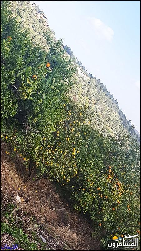 638368 المسافرون العرب الطبيعة الجبلية الخلابة