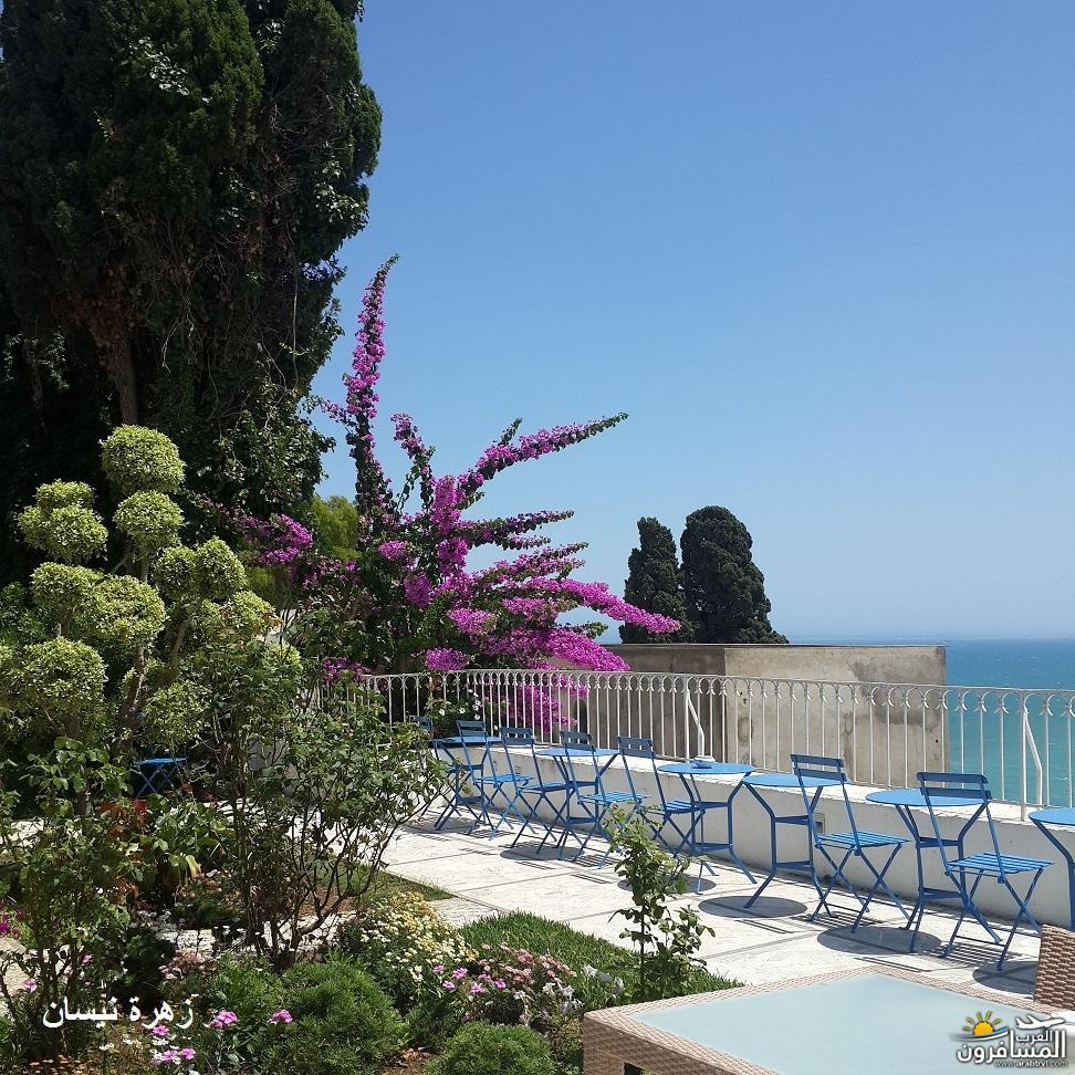 640961 المسافرون العرب فندق دار سعيد