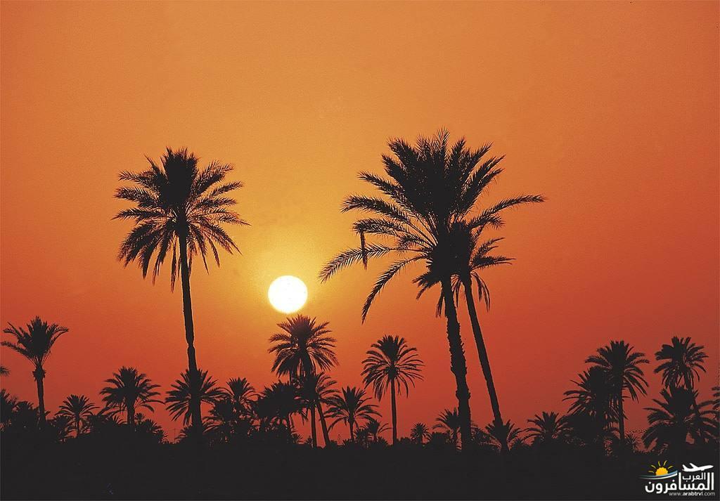 642032 المسافرون العرب الاجواء الشتوية فى تونس