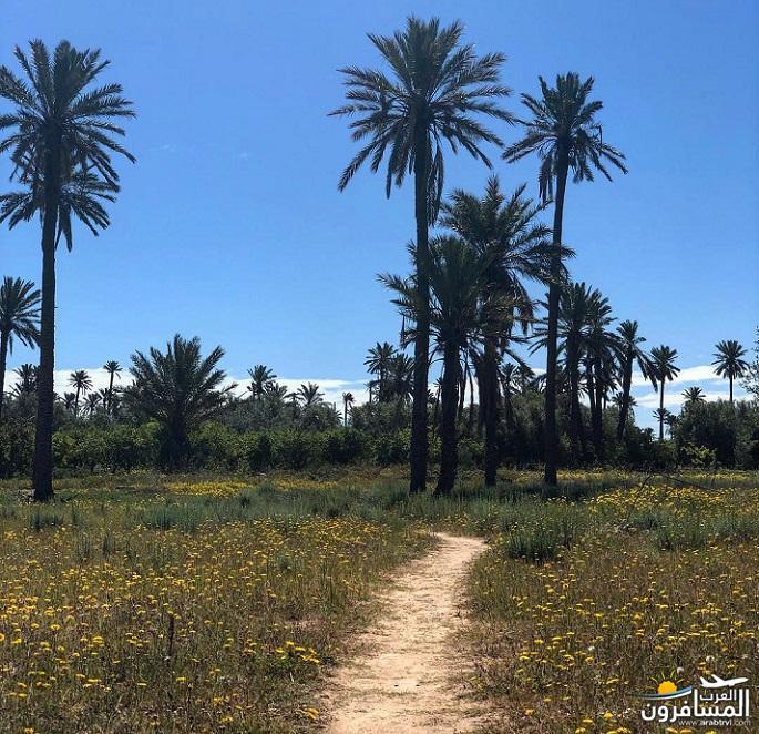 642701 المسافرون العرب الطبيعة الخلابة والاجواء الربيعية فى تونس