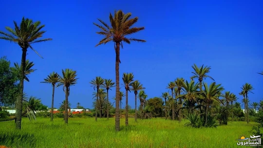 642702 المسافرون العرب الطبيعة الخلابة والاجواء الربيعية فى تونس