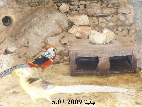 642800 المسافرون العرب مغارة جعيتا
