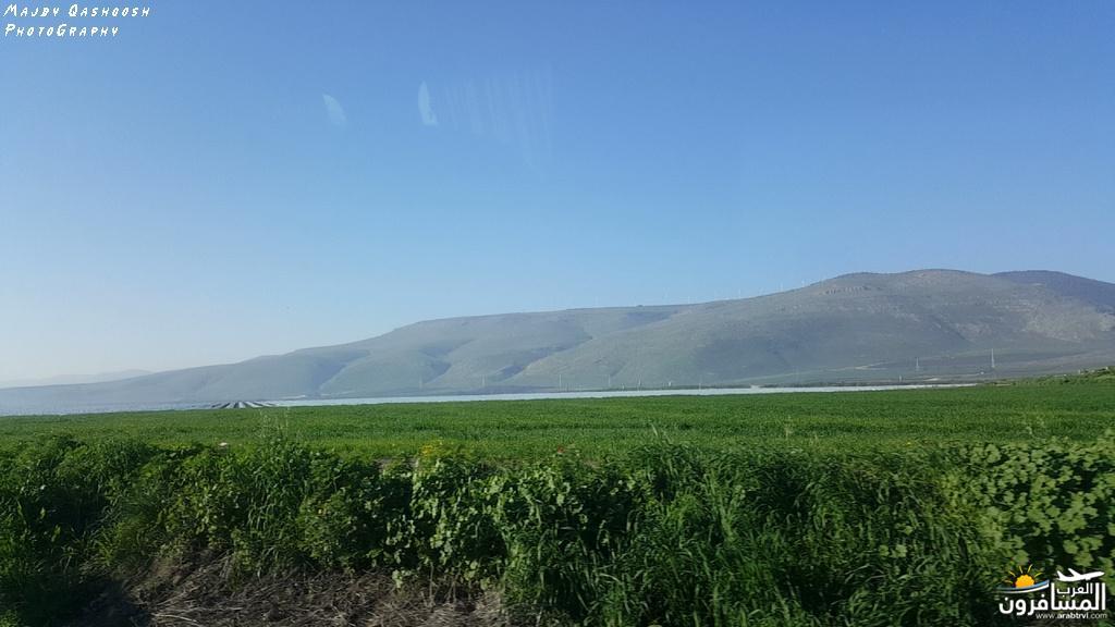 642829 المسافرون العرب الأغوار الشمالية - فلسطين