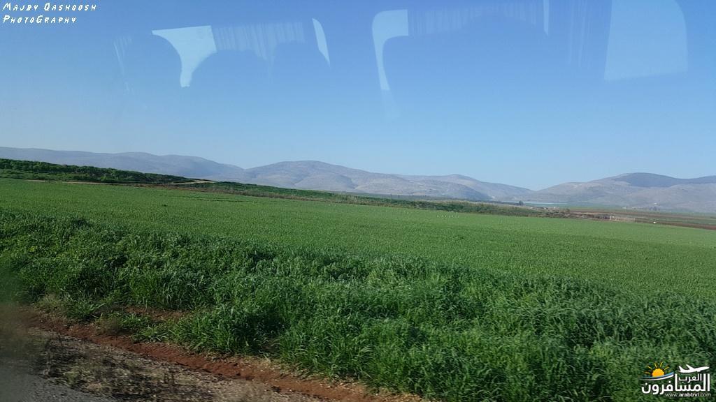 642832 المسافرون العرب الأغوار الشمالية - فلسطين