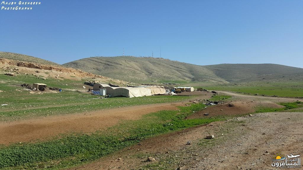 642843 المسافرون العرب الأغوار الشمالية - فلسطين