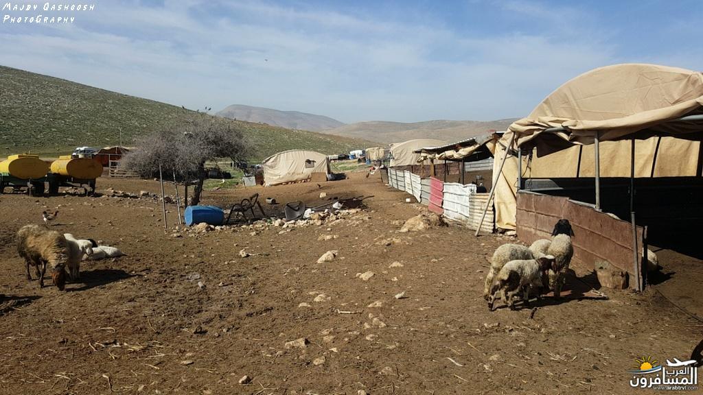 642849 المسافرون العرب الأغوار الشمالية - فلسطين