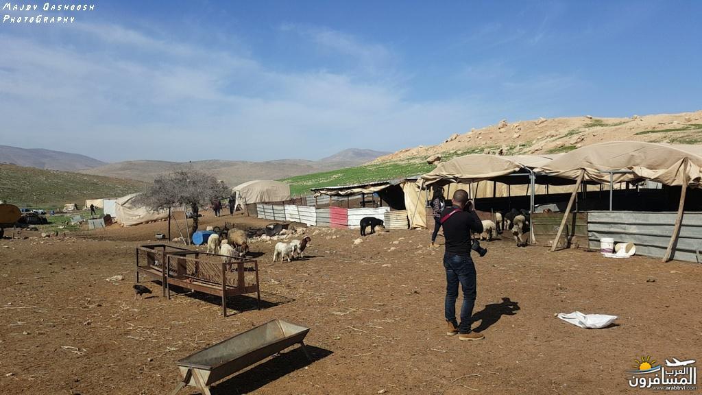 642851 المسافرون العرب الأغوار الشمالية - فلسطين
