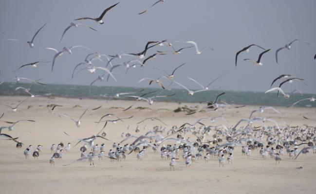 643130 المسافرون العرب موريتانيا جمال طبيعتها الصحراوي