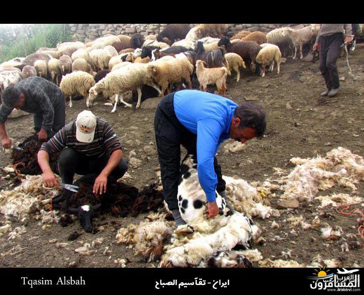 644275 المسافرون العرب الجمهوريه الاسلاميه ايران