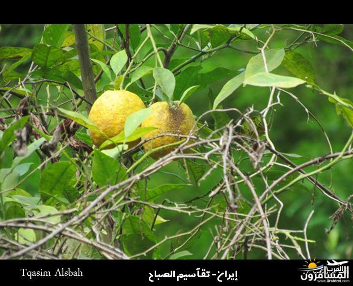 arabtrvl1434074126325.jpg