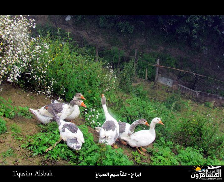 644282 المسافرون العرب الجمهوريه الاسلاميه ايران